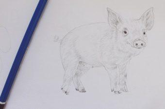 Cría de cerdos en la naturaleza, una actividad sostenible