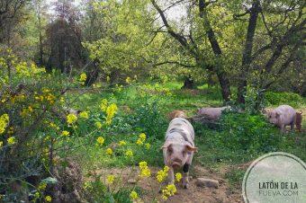 Primavera en el monte del Latón