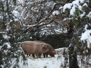 Diciembre. Nieve en el bosque