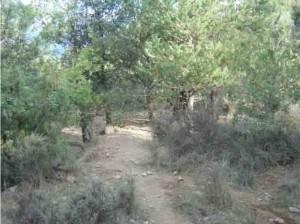 El terreno desbrozado tras la crianza de los Latones